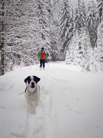 Králičák v zimě