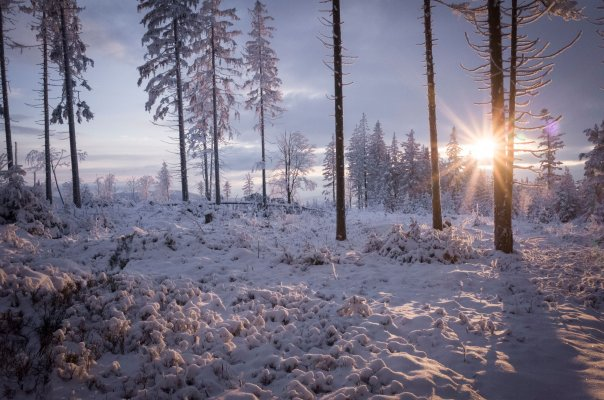 Kralický Sněžník